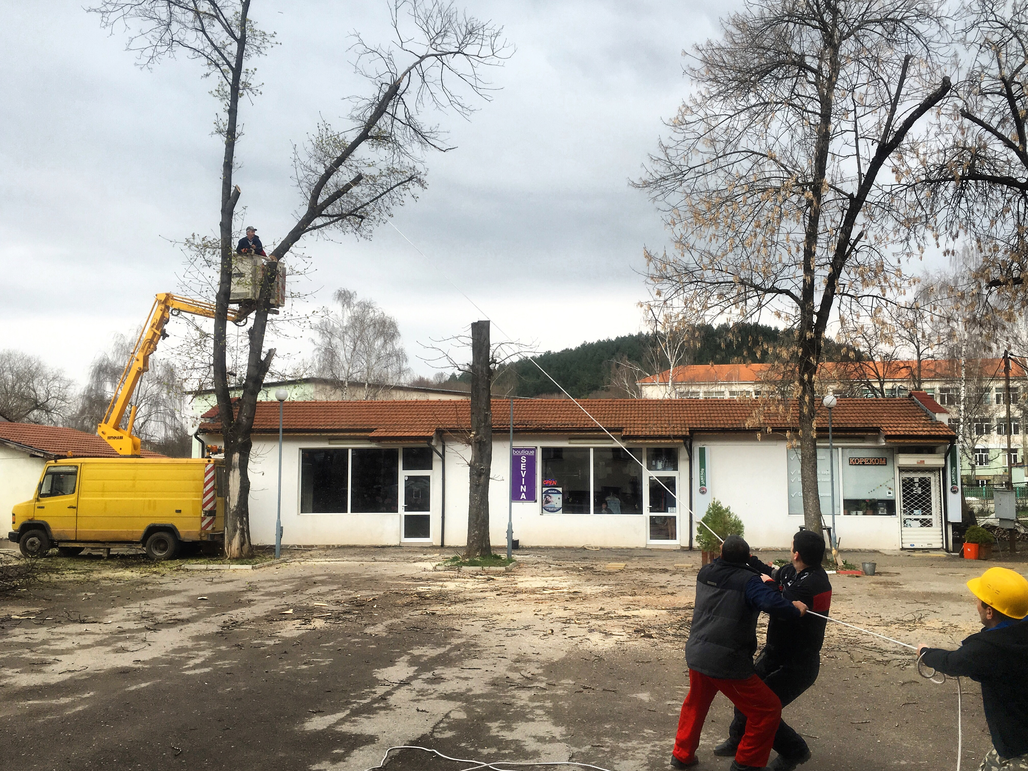 Община Годеч окастри опасни клони на дървета в центъра